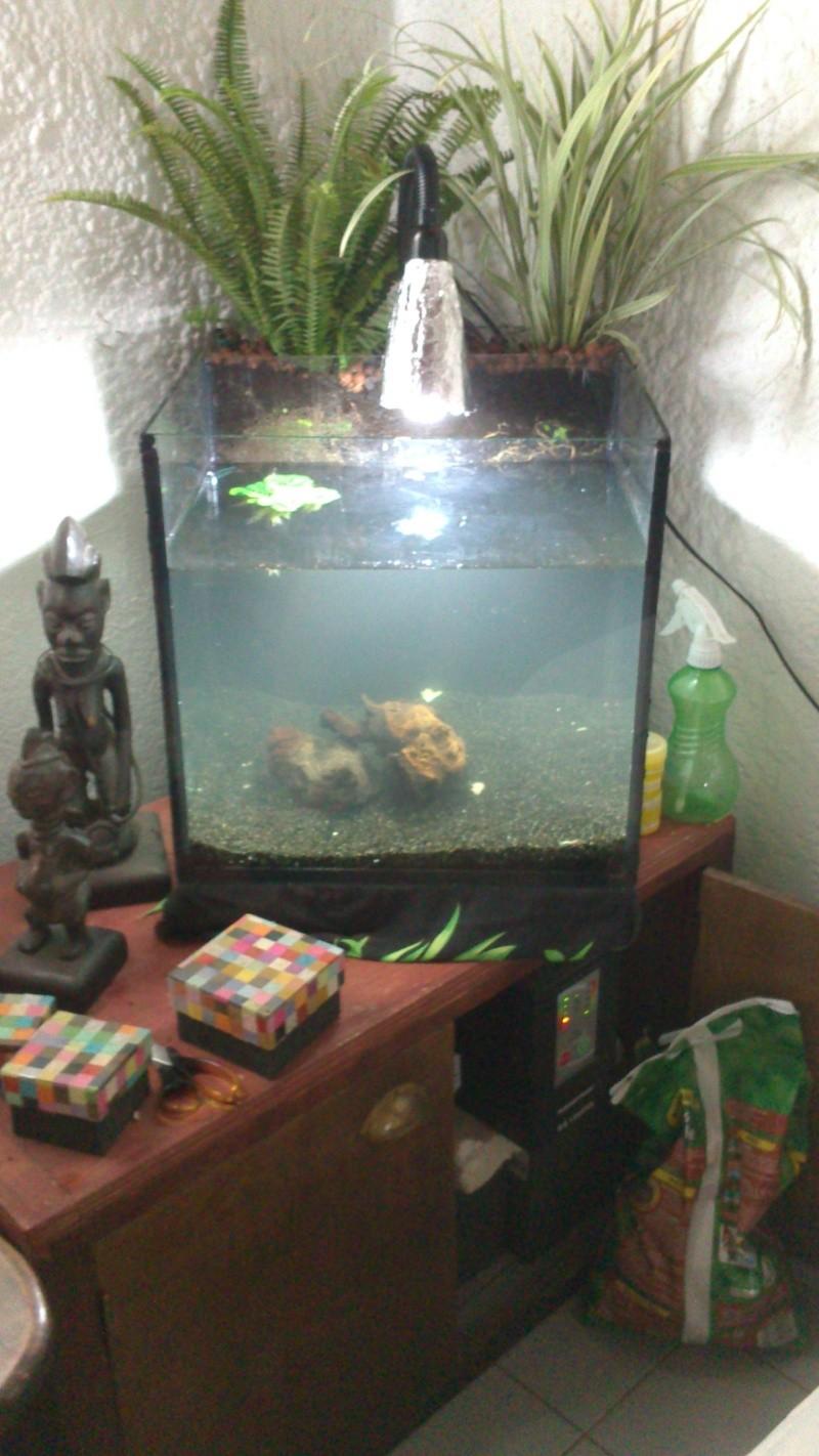 Mon aquarium fait maison for Terreau aquarium