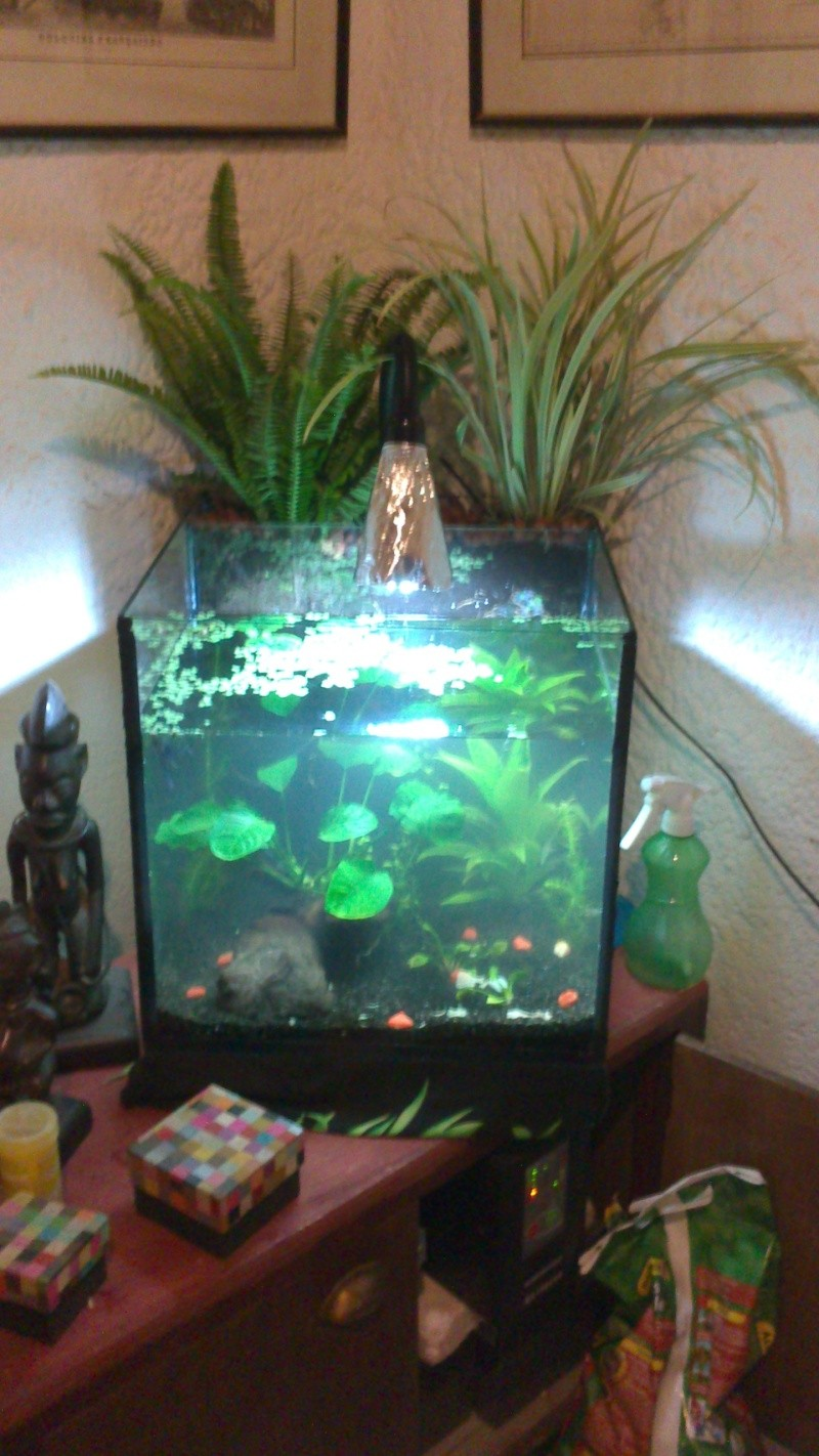 mon aquarium fait maison. Black Bedroom Furniture Sets. Home Design Ideas