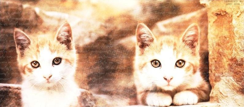 Œilde chat