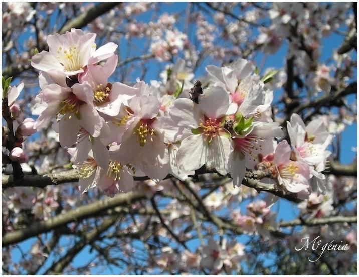 Amateurs et passionn s du jardin - Traitement arbres fruitiers ...