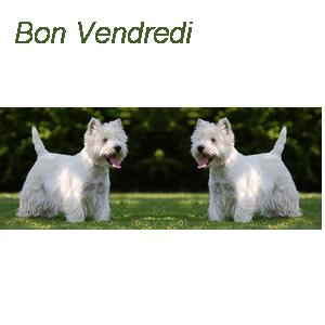 bon_ve10.png