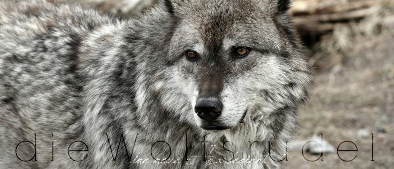 Die Wolfsrudel