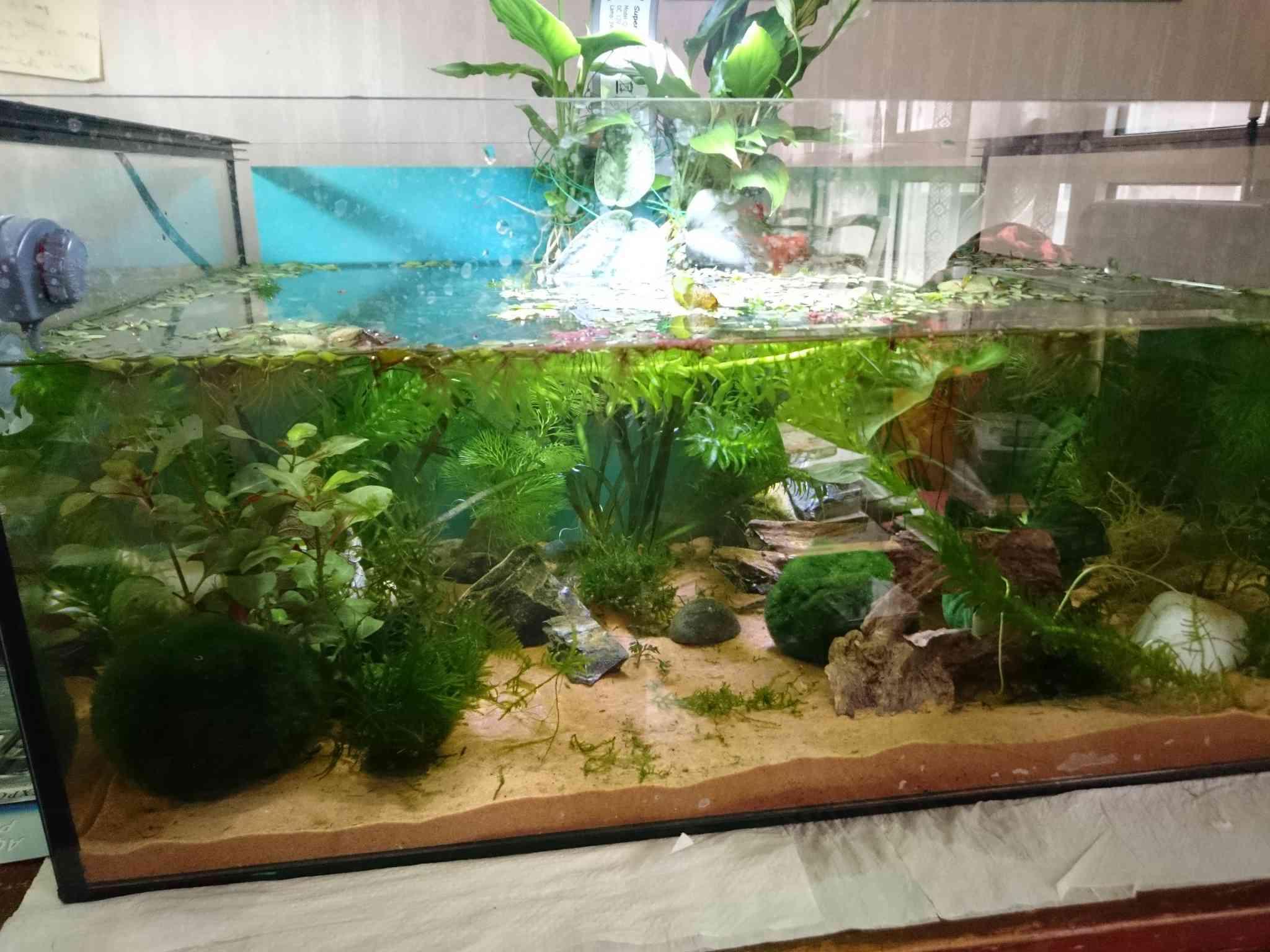 Decoration Aquarium Axolotl : Aquarium pour axolotls