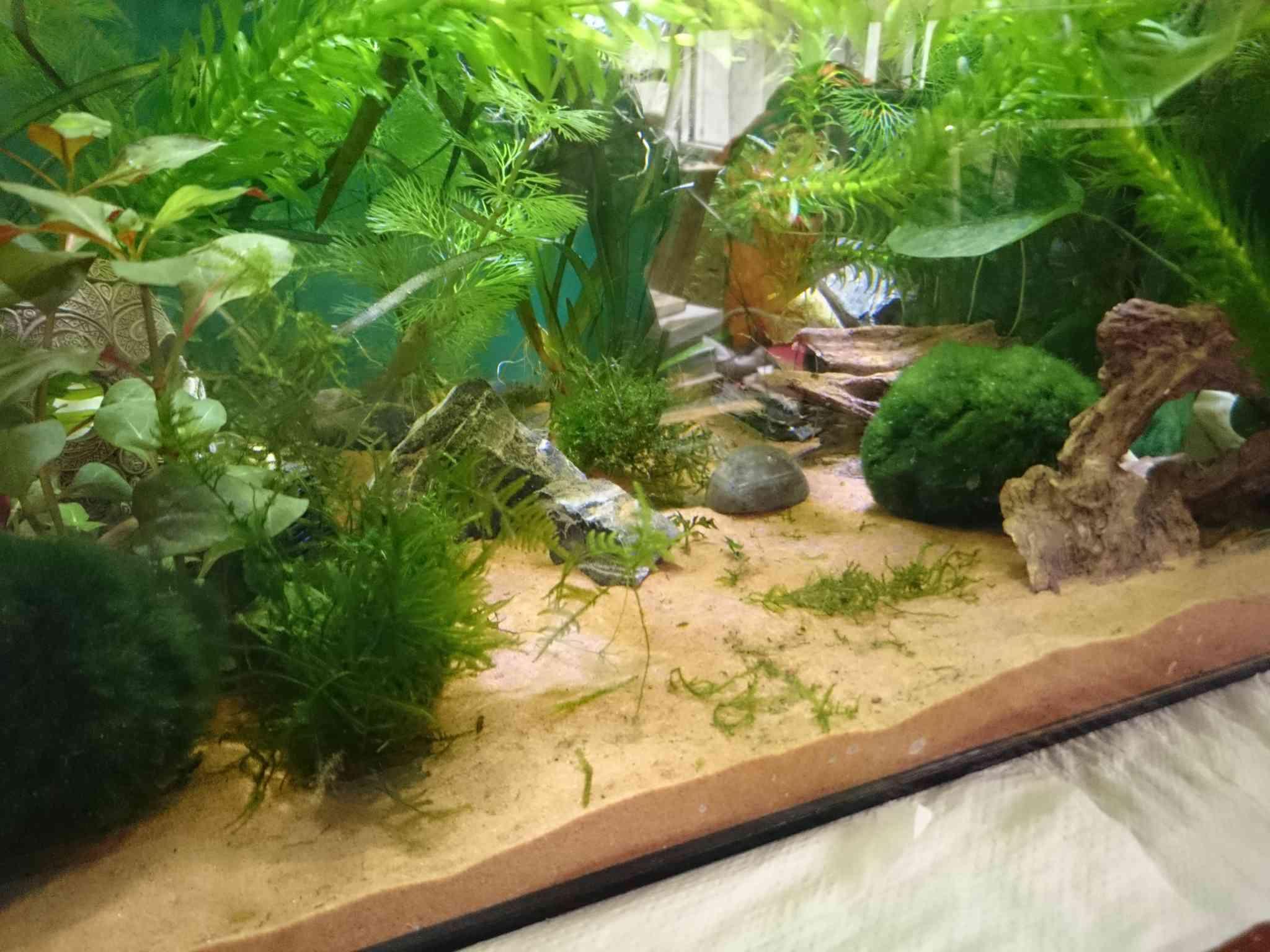 Aquarium pour axolotls for Substrat pour aquarium
