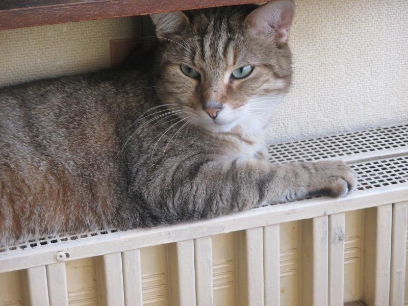recherche fa pour snoopy adorable chat m le de 7 ans avant fourri re. Black Bedroom Furniture Sets. Home Design Ideas