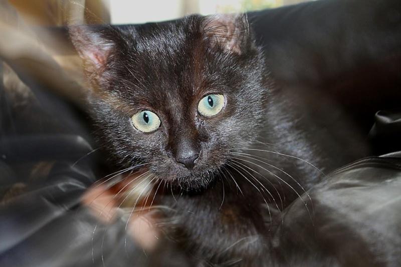odeur qui attire les chats pour faire pipi. Black Bedroom Furniture Sets. Home Design Ideas