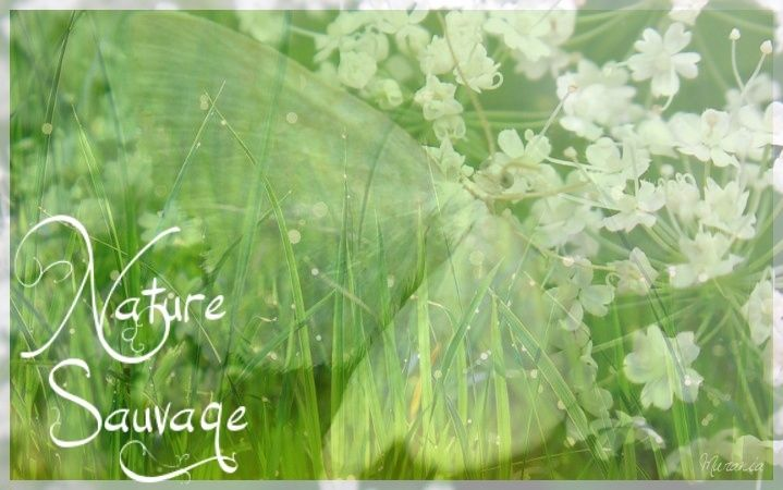 NatureSauvage