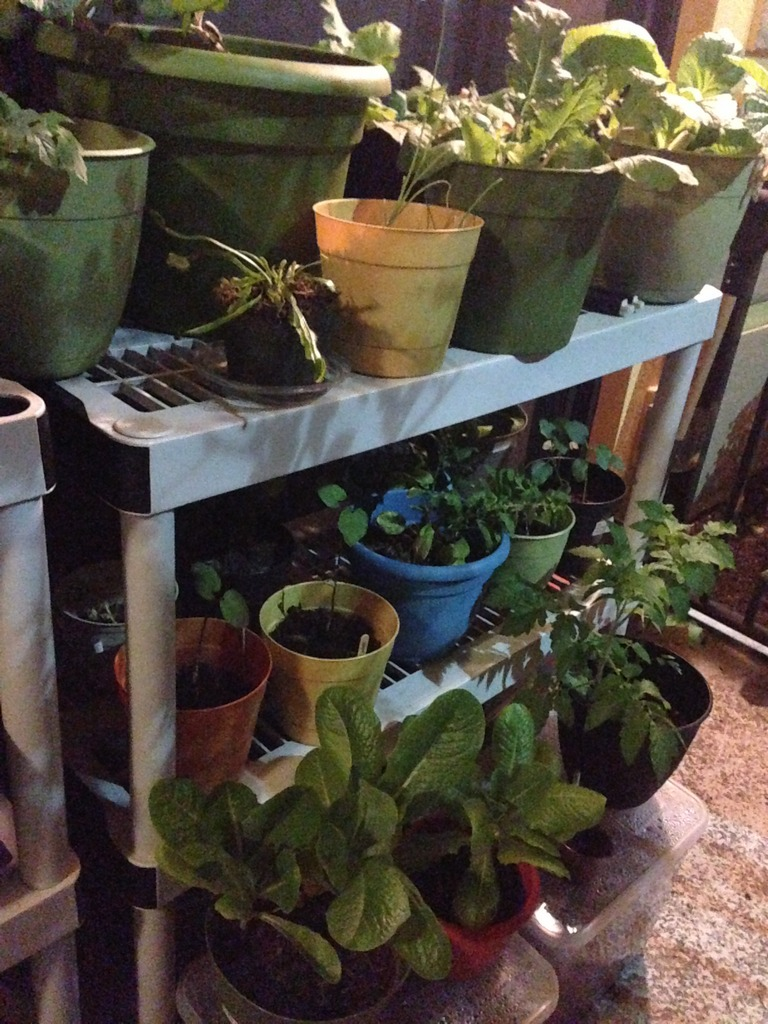 My Patio Garden Page 2