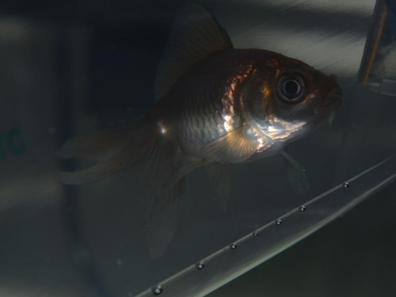 Poisson rouge dans mon 96l page 9 for Aquarium 96l poisson rouge