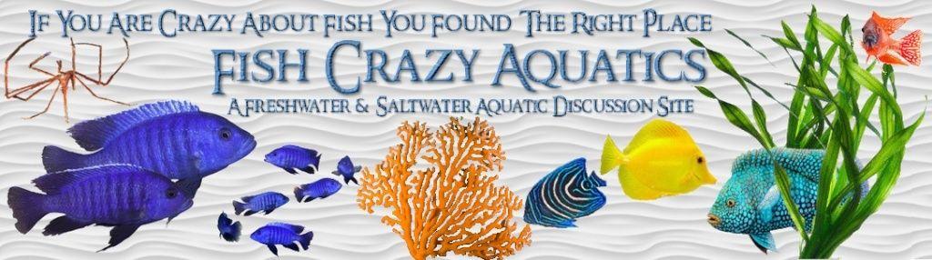 FISH CRAZY AQUATICS