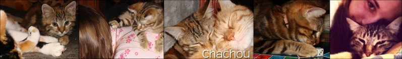 chacho15.jpg