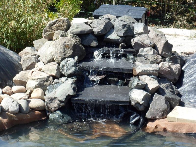 Notre b b de 22m3 forum bassin - Bassin poisson cascade creteil ...