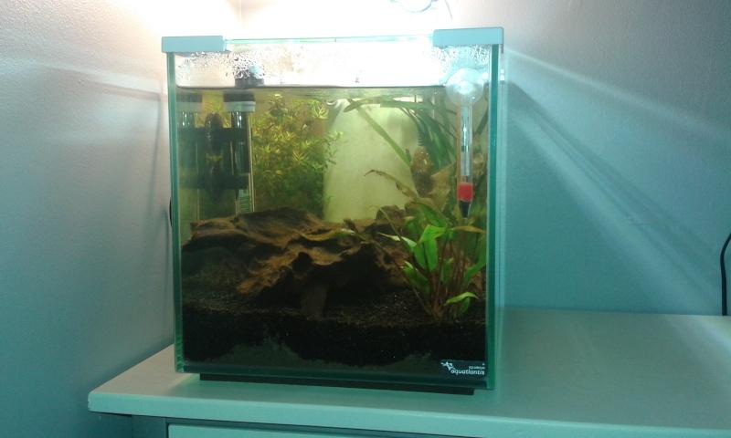 nano aquarium 20l. Black Bedroom Furniture Sets. Home Design Ideas